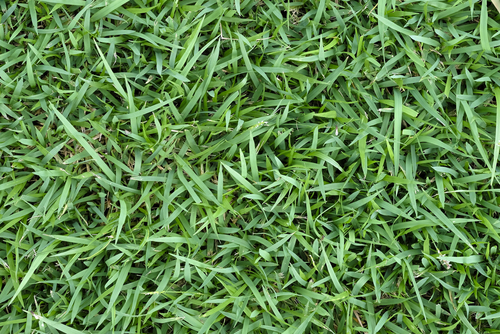 Thick turf in the yard of Oklahoma city home fertilized by Green and Clean
